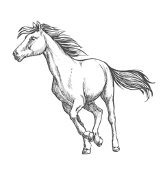 White horse freely running sketch portrait vector image vector image