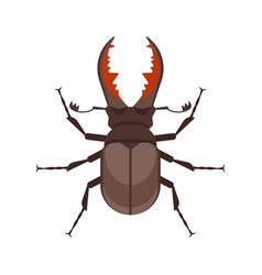 flat style of stag beetle vector image