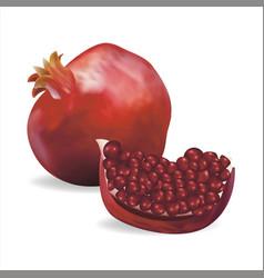 realistic detailed 3d fresh pomegranate set vector image
