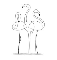 Three graceful flamingos on a white background vector