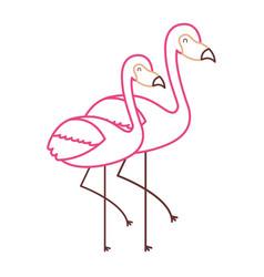 two flamingo bird exotic tropical animal image vector image