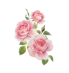watercolor rose omposition vector image