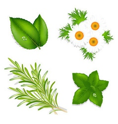 Aroma Herbs vector image