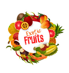 exotic tropical fruits banner vector image