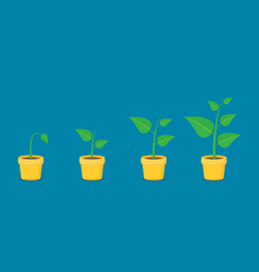 Phases plant growing planting tree infographic in vector