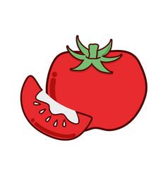 Red tomato organic vegetable with one slice vector
