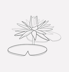 water lily icon line element vector image