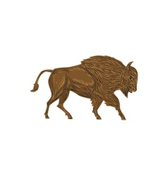 North American Bison Buffalo Charging Retro vector image vector image