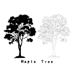 Maple Tree Silhouette Contours and Inscriptions vector image