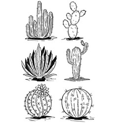 set of cactus isolated on white background vector image