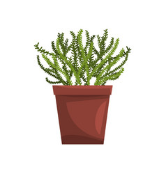 asparagus indoor house plant in brown pot element vector image vector image
