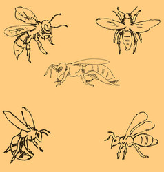 flies sketch by hand pencil drawing by hand vector image