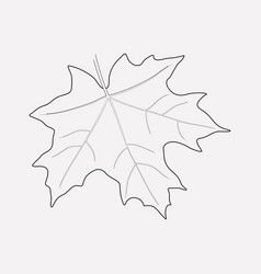 maple icon line element of vector image