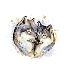 portrait wolves from a splash watercolor vector image