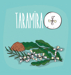 set of isolated plant taramira flowers herb vector image