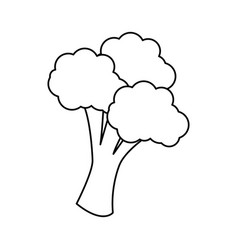 Broccoli vegetable icon vector