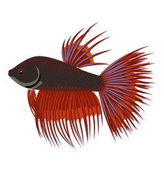 Crowntail fighting cartoon aquarium fish vector
