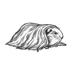 guinea pig cavy animal engraving vector image