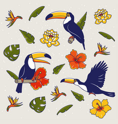 Pattern with toucan flowers palm trees vector