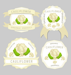 The theme cabbage cauliflower vector