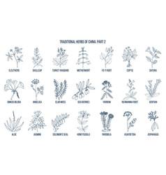 Chinese traditional medicinal herbs vector