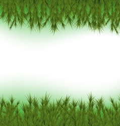 Fir Background vector image vector image