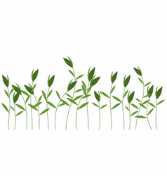 Green weeds isolated vector