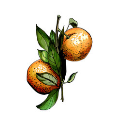 Hand drawn painted citrus vector