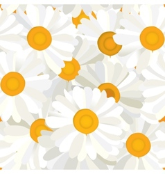 Seamless camomiles background vector