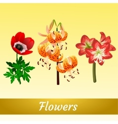 Three elegant different flower types vector image