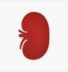 3d kidney human renal icon isolated vector