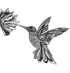 flower hummingbird colibri art zentangle doodle vector image