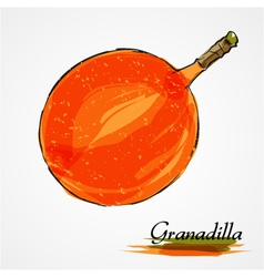 granadilla vector image