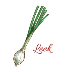 Leek vegetable plant isolated sketch icon vector image