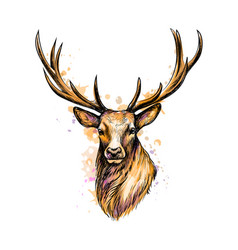 portrait a deer head from a splash of vector image