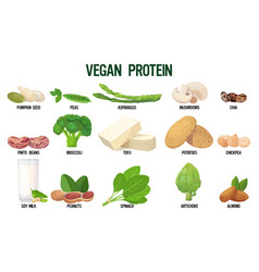set vegan sources protein fresh organic vector image