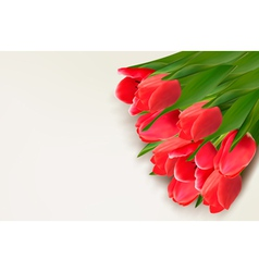 Flower background with red tulips and sample text vector image vector image