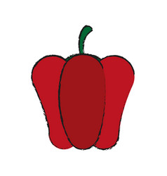 pepper vegetable icon vector image vector image