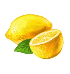 picture of lemon vector image vector image