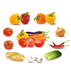 colorful group of vegetables vector image vector image