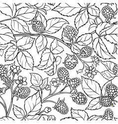boysenberry branches pattern on white vector image