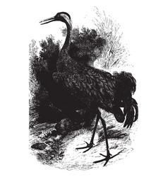 common european crane vintage vector image