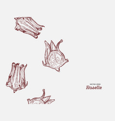 hand drawn roselle flower vector image