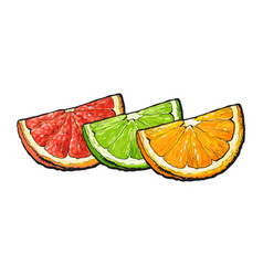 Quarter piece of orange grapefruit lime hand vector