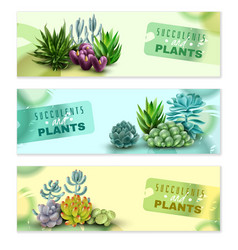 Succulents horizontal banners set vector