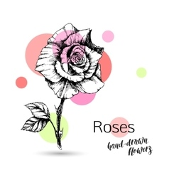 Roses flower for wedding or birthday card vector image vector image
