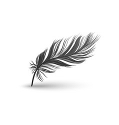 black falling fluffy feather vector image