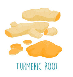 fresh turmeric root on white background vector image