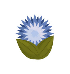 Star flower bud with leaves vector