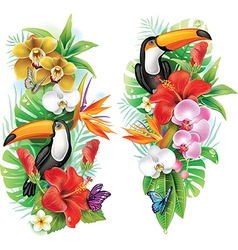 Tropical flowers toucan and a butterflies vector image